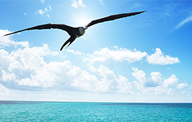 photo of bird flying over the water